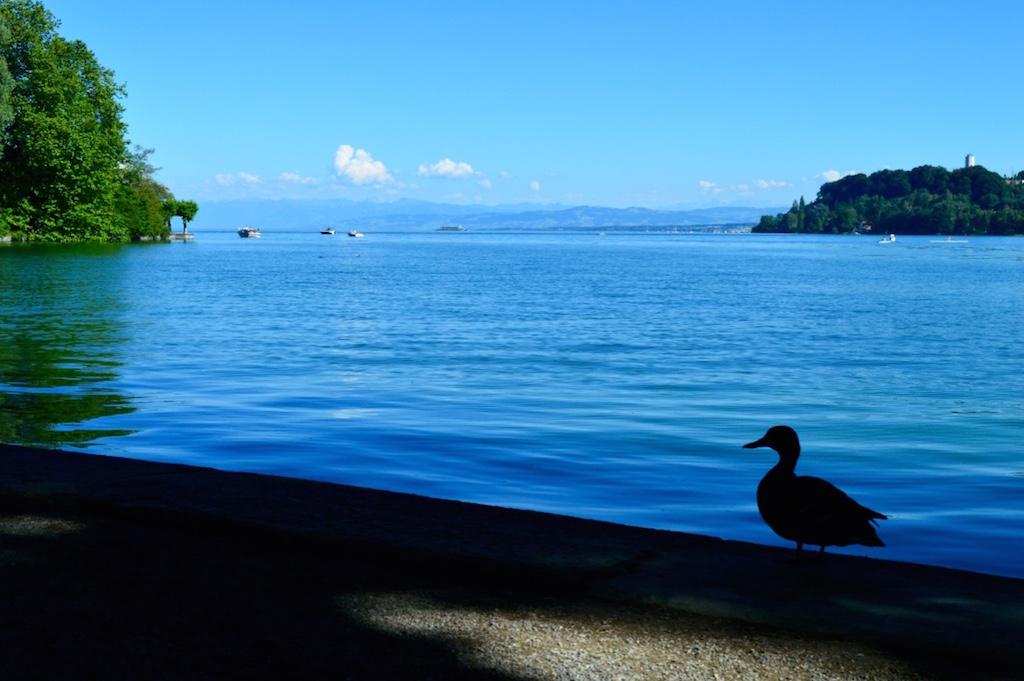 Insel Mainau duck
