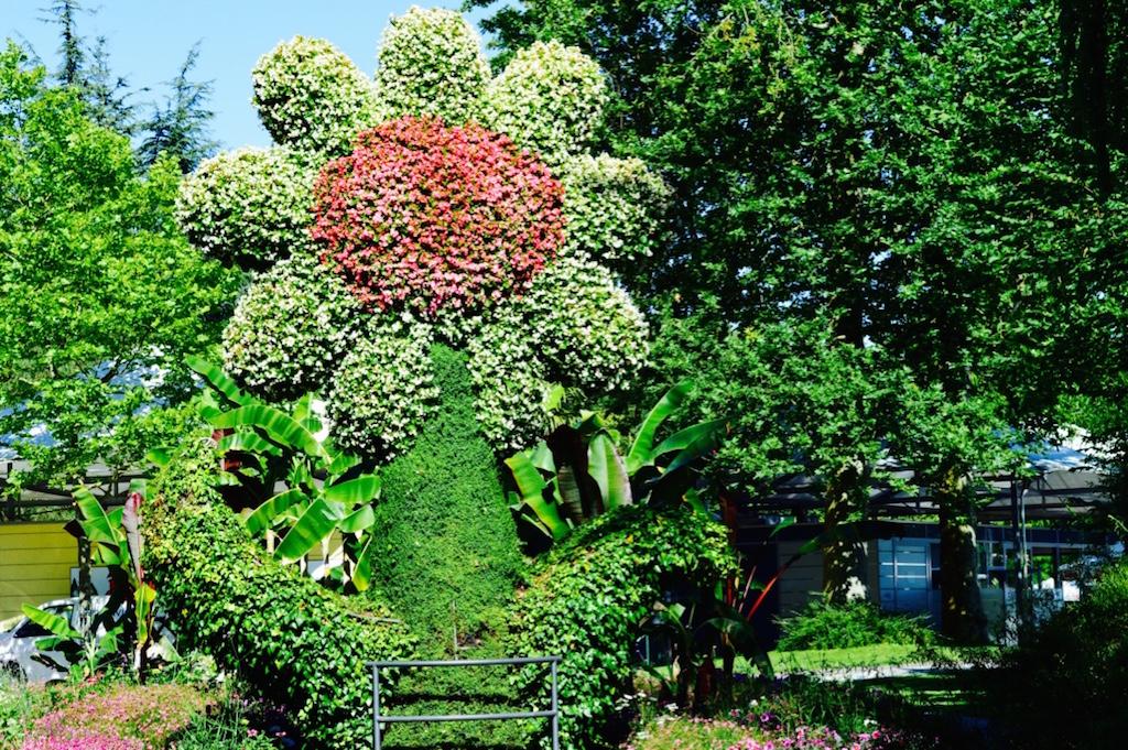 Insel Mainau flower